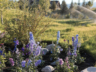 3-creek-landscaping-flowers-2
