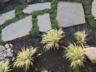 3-creek-landscaping-walkway
