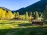 Seven-Cabins-Commercial-Landscaping-Sod-Trees
