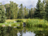Showcase-Estate-Main-Pond