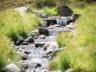 Camp-Creek-Custom-Stream-Close-Up